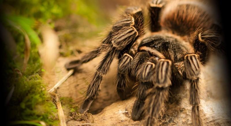 spin_kleinste_zoo_dierentuin