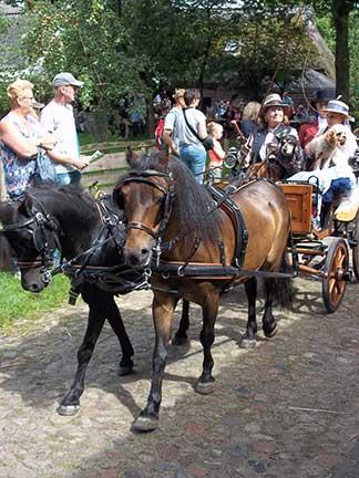 Dag-van-het-paard