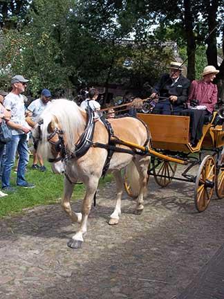 Dag-van-het-paard2