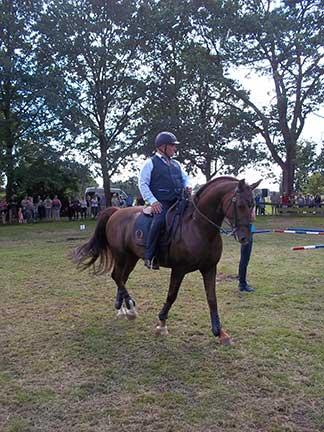 367_Dag-van-het-paard3